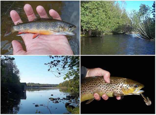Wisconsin 10 000 miles of river eat sleep fish for Brule river fishing report