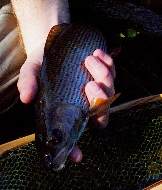 A fish for autumn eat sleep fish for How do fishes sleep