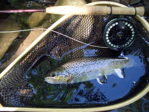 Fishing Ultralight | Eat, Sleep, Fish