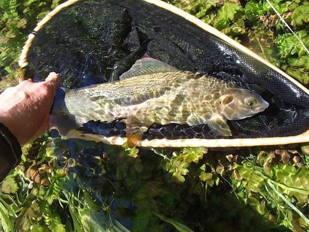 Bosinian lessons eat sleep fish for How do fishes sleep